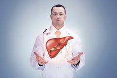 Docteur avec du foie dans des mains Fond gris De haute résolution photo stock