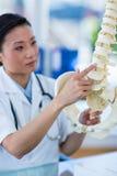 Docteur concentré montrant l'épine anatomique photo libre de droits