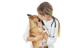 Docteur et chien vétérinaires photos stock