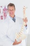 Docteur heureux montrant l'épine anatomique Image libre de droits