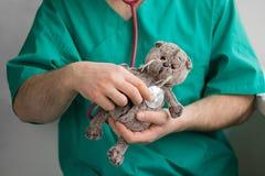 Docteur masculin avec la barbe dans les prises vertes de costume dans des mains et les examins avec le chat gris de jouet de stét images libres de droits