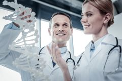 Docteur qualifié agréable tenant le modèle d'ADN regardant son collègue Images stock