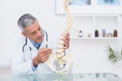 Doctor with anatomical spine Royalty Free Stock Photography