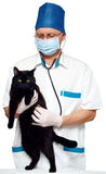 Doctor and a black cat on a white background. The doctor listens to the heart of the cat stethoscope. Isolated on white Stock Image