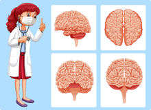 Doctor and brain diagrams Royalty Free Stock Photos