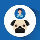 Doctor cartoon veterinarian dog pug Stock Photos