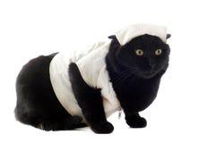 Doctor cat Stock Photos