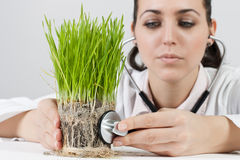 Doctor checked the plant Royalty Free Stock Photo