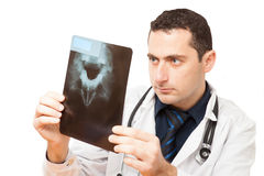 Doctor checks up x-ray. Doctor checks up toothx-ray Royalty Free Stock Image