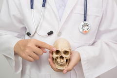 Doctor in coat holding human skull Stock Images