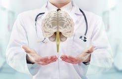 Doctor con el estetoscopio y cerebros en las manos en un hospital Fotos de archivo libres de regalías