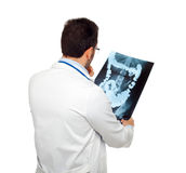 Doctor consulting a bowel radiography. Isolated on white Stock Image