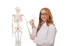 Doctor de sexo femenino joven con el esqueleto aislado encendido Fotos de archivo libres de regalías