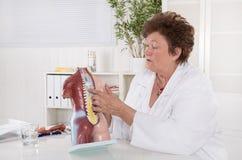 Doctor de sexo femenino mayor que explica el cuerpo humano con el torso Imagen de archivo libre de regalías