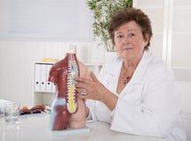 Doctor de sexo femenino mayor que explica el cuerpo humano con el torso imagen de archivo