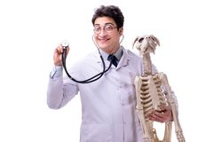 The doctor with dog skeleton isolated on white background. Doctor with dog skeleton isolated on white background stock photo
