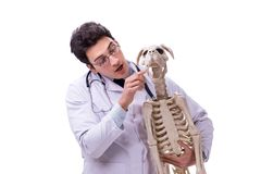 The doctor with dog skeleton isolated on white background. Doctor with dog skeleton isolated on white background royalty free stock photos