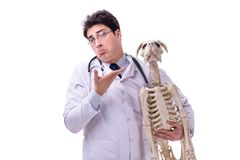 The doctor with dog skeleton isolated on white background. Doctor with dog skeleton isolated on white background stock image