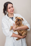 Doctor examines a small dog Griffon. Young woman doctor examines a small dog Griffon Royalty Free Stock Images
