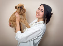 Doctor examines a small dog Griffon. Young woman doctor examines a small dog Griffon Royalty Free Stock Image