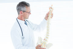 Doctor examining anatomical spine Royalty Free Stock Photo