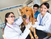 Doctor examining a dog Stock Image