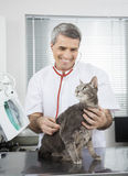 Doctor Examining Ill Cat With Stethoscope Stock Images