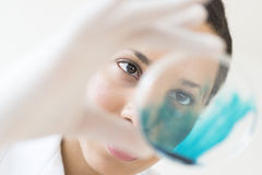 Doctor Examining Solution In Petri Dish At Laboratory Royalty Free Stock Photography