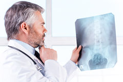 Doctor examining X-ray. Royalty Free Stock Images