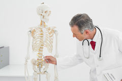 Doctor explaining spine in office Royalty Free Stock Photos