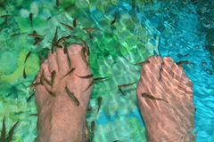 Doctor Fish Eat Dry Skin From Feet at Bali Spa. Garra rufa, also called doctor fish from Turkey feed on the dry skin of patients at a Bali Spa, Indonesia Stock Photo