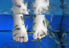 Doctor fish - fisha spa. At Sunny beach, Bulgaria Stock Images