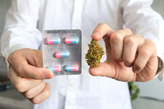 Doctor hand holding bud of medical cannabis and pills royalty free stock image