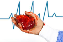 Doctor hold patient heart with ecg signal Stock Images