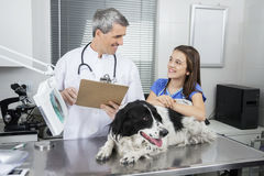 Doctor Holding Clipboard While Looking At Girl With Border Colli. Smiling male doctor holding clipboard while looking at girl with Border Collie in clinic Royalty Free Stock Image