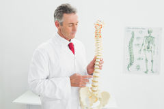 Doctor holding skeleton model in office Stock Photography