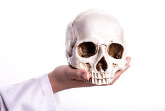 Doctor holding a skull in his hands. Stock Image