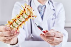 Doctor holding spine model during explanation. A close up of a male doctor holding model anatomy of a human spinal column while giving an explanation royalty free stock photos