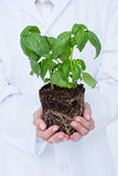 Doctor holing basil plant Royalty Free Stock Images