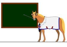 Doctor horse Stock Photos