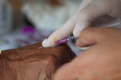 Doctor Injecting Patient With Syringe To Collect Blood Stock Images