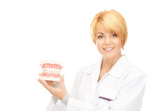 Doctor with jaws. Picture of attractive female doctor with jaws royalty free stock photo