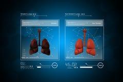 Doctor joven que muestra los pulmones Foto de archivo