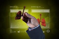 Doctor joven que muestra los pulmones Fotografía de archivo