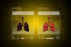 Doctor joven que muestra los pulmones Imagenes de archivo