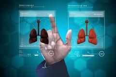 Doctor joven que muestra los pulmones Fotografía de archivo libre de regalías