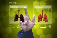 Doctor joven que muestra los pulmones Imagen de archivo
