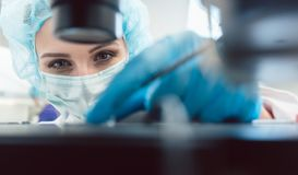 Doctor or lab technician adjusting needle to fertilize a human egg. Under the microscope royalty free stock photography