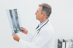 Doctor looking at xray picture of spine in office Royalty Free Stock Image