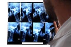 Doctor looks at MRI Stock Photos